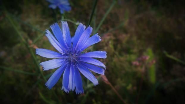 Flower Plant Garden Free Photo