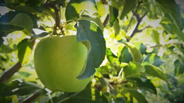 Fruit Edible fruit Citrus #226527