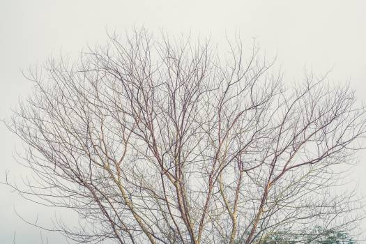 trees branches fall  Free Photo