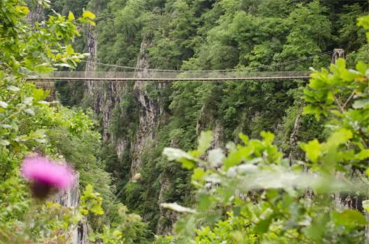 bridge jungle trees  Free Photo
