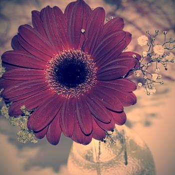 Flower Daisy Petal Free Photo
