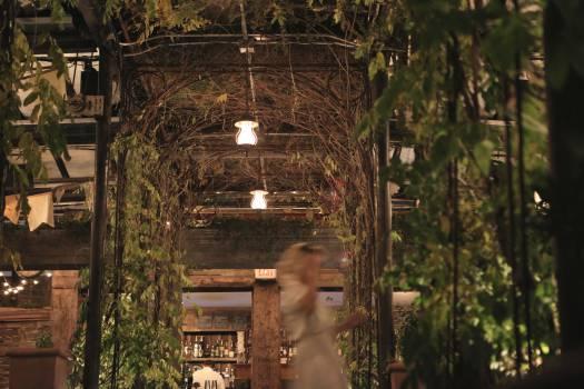restaurant vines leaves  #22681