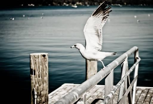 seagull animal bird  Free Photo