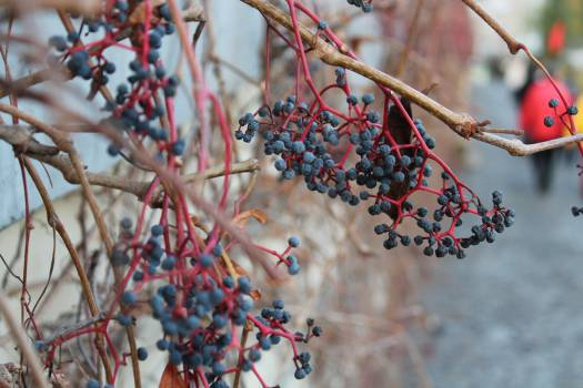 plants nature autumn  #22704