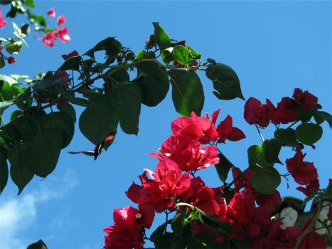 branches blossoms leaves  Free Photo