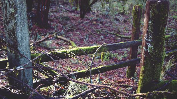 moss forest woods  Free Photo