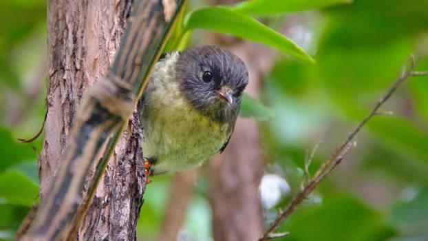 Bird Vertebrate Wildlife Free Photo