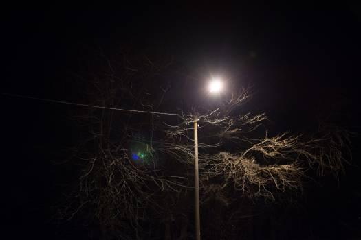 tree post power lines  #22748