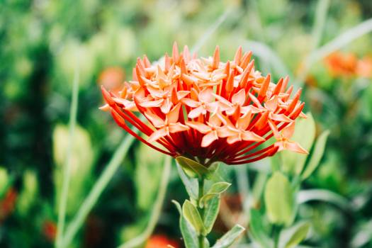 Shrub Woody plant Vascular plant Free Photo