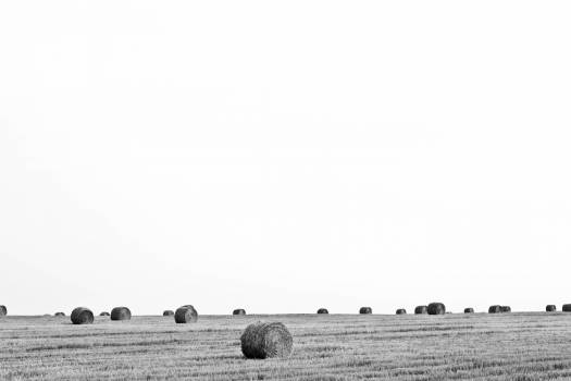 black and white farm country  #22774