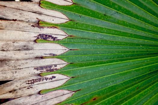 Asparagus Plant Fresh Free Photo