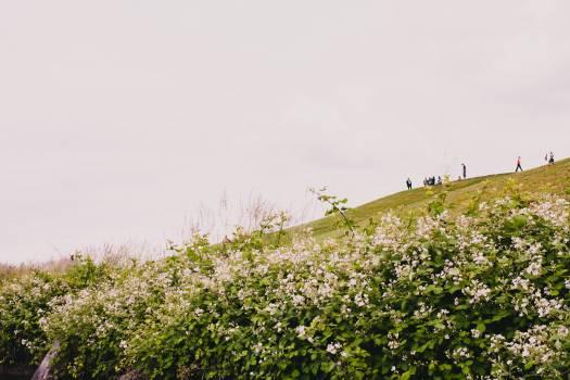 Landscape Sky Grass #227972