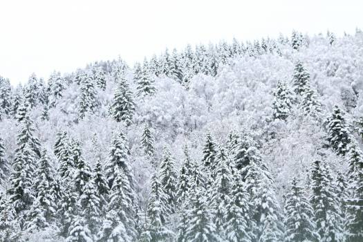 Ice Snow Crystal #227980
