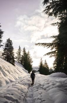 Fir Snow Winter #228055