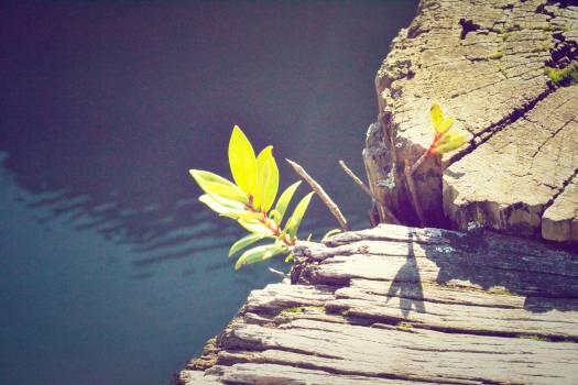 water flower sunshine  #22829