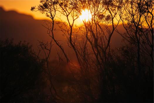 sunset dusk plants  Free Photo
