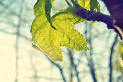 green plan leaves  #22869