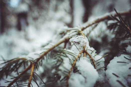 Snow Arthropod Tree Free Photo