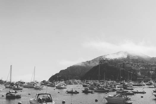 catalina boats marina  Free Photo