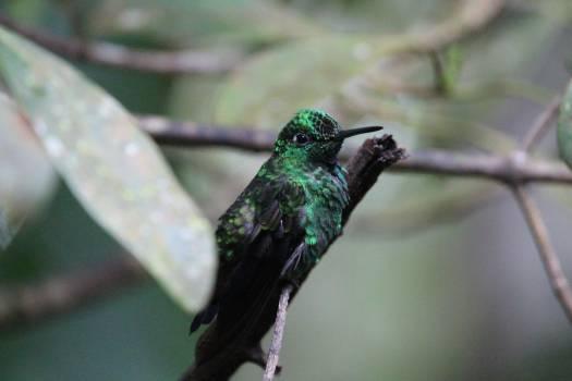 Jacamar Bird Hummingbird Free Photo