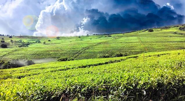 Field Landscape Rural #229265