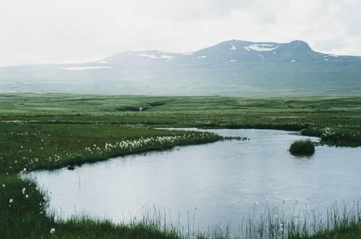 pond water fields  Free Photo