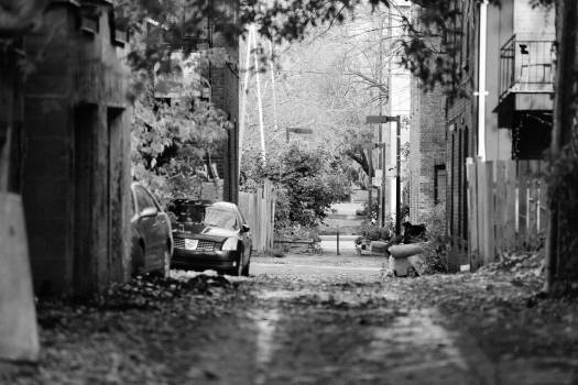alley street fences  Free Photo