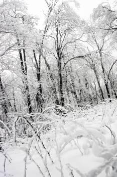 winter snow ice  Free Photo