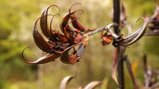Rhinoceros beetle Insect Beetle #229725