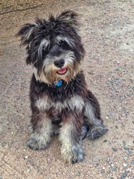 Terrier Dog Hunting dog #229892