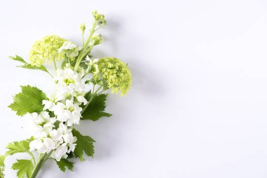 Plant Herb Parsley Free Photo