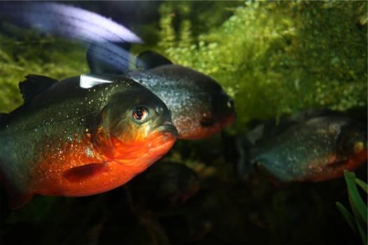 fish  #23026