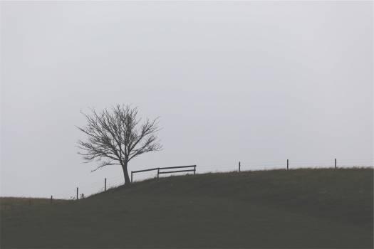 fence tree grass  Free Photo