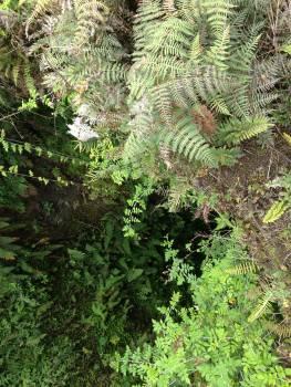 Tree Fern Plant Free Photo