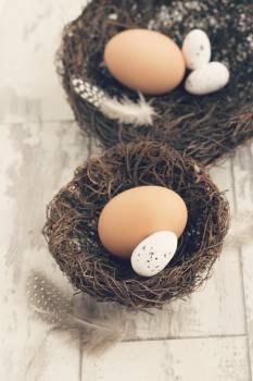 Egg Eggs Nest-egg Free Photo