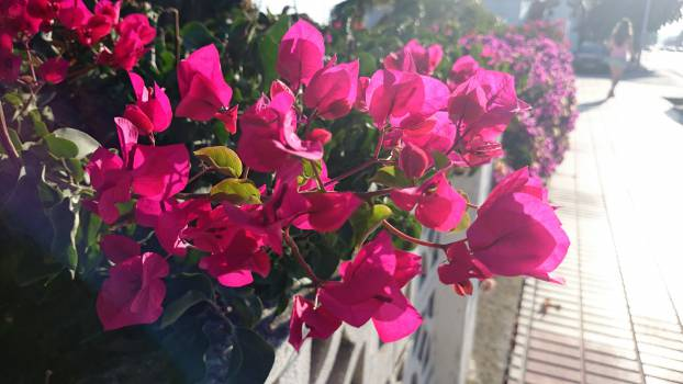 pink flowers garden  #23046