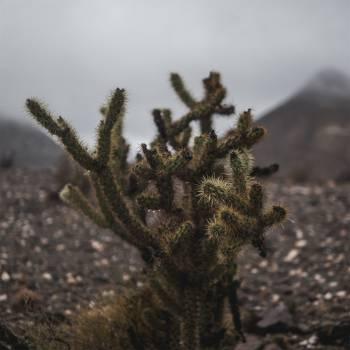 cactus plant  #23063
