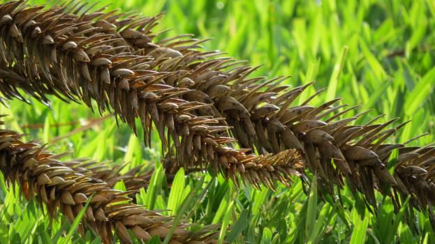nature plants leaves  Free Photo