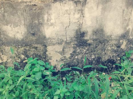 plants concrete  Free Photo