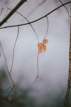 leaf leaves rain  #23115