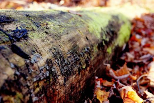 tree trunk bark woods  #23151