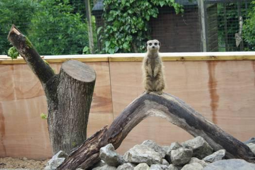 Lemur Mammal Primate #231994