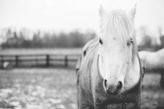 Horse Animal Farm Free Photo