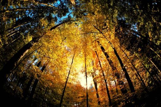 Autumn Maple Season #232820