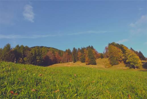 autumn trees fall  #23296