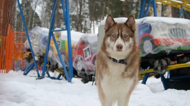 Dog Canine Domestic animal #233131