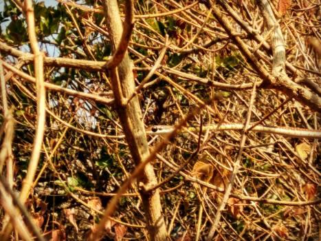 Plant Leaf Branch Free Photo