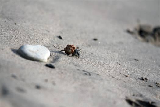 crab shell sand  #23346