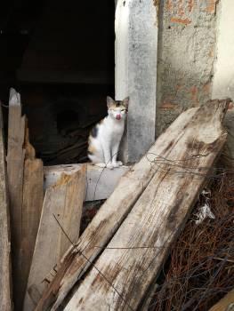 Cat Kitten Feline Free Photo