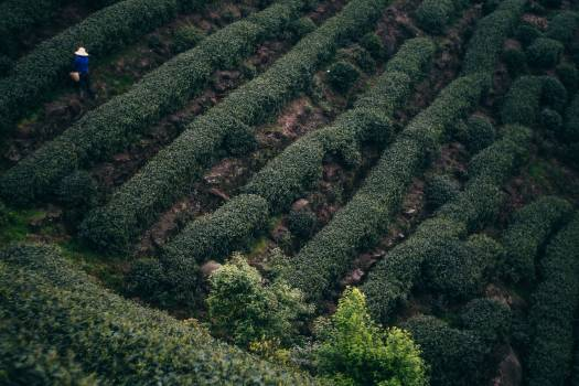 Maze Fossil Landscape #233515